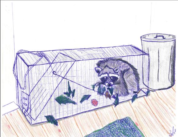 TB box trap